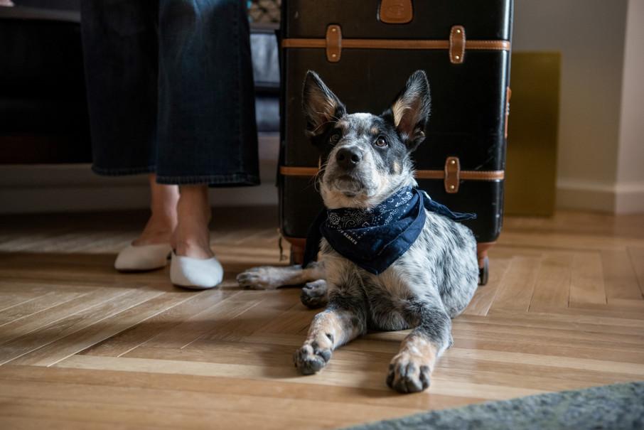 PuppyPhotos (5 of 5).JPG