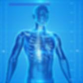 healthcare_labs_sq_pixabay_human-skeleto