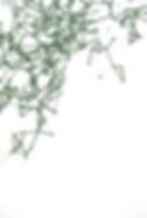 Network Vector_RGB_Green_TopLeft.png