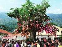 Lam Tsuen Wishing Tree_640x480.jpg