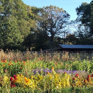 flower gardens with barn view.jpg