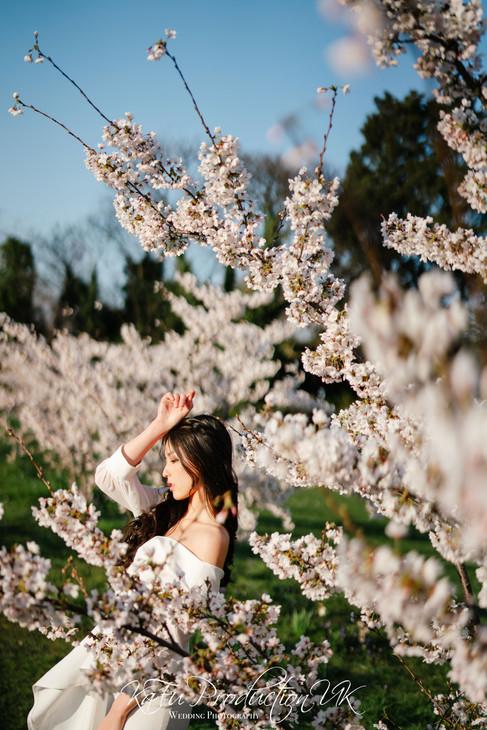 Cherry blossoms (25).jpg