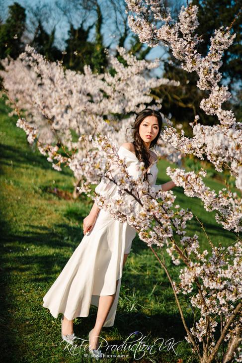 Cherry blossoms (24).jpg