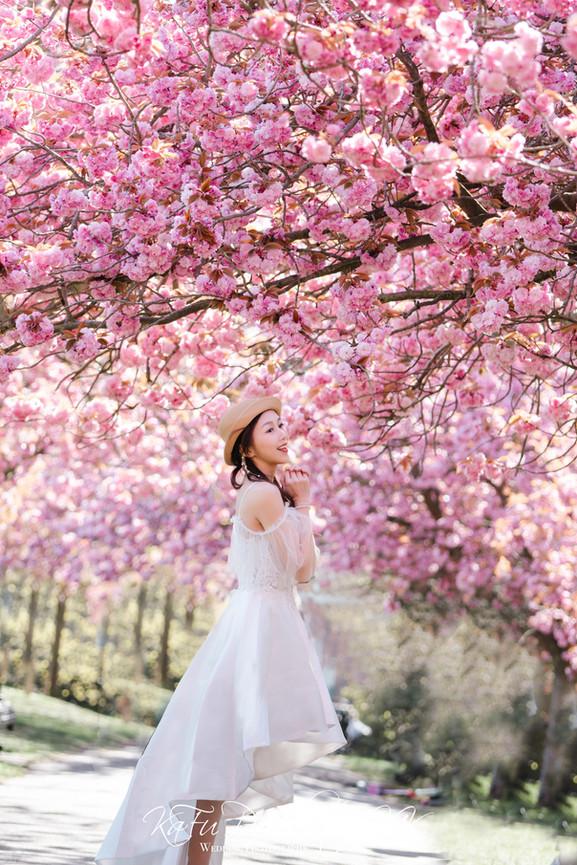Cherry blossoms (38).jpg