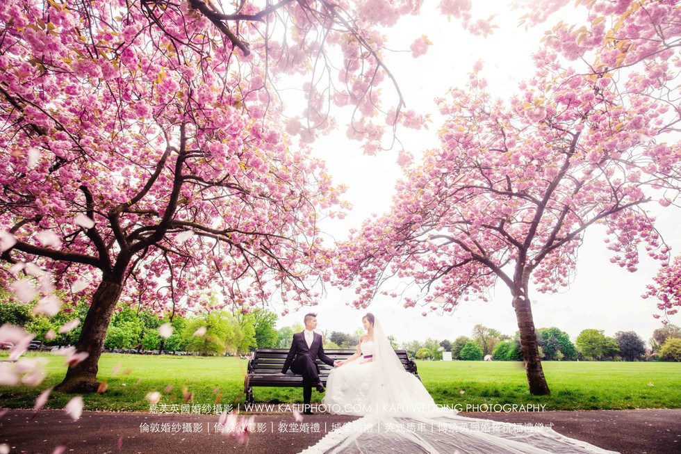 Cherry blossoms (3).jpg