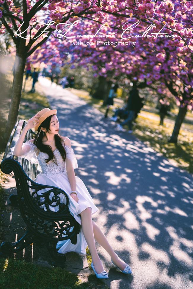 Cherry blossoms (19).jpg