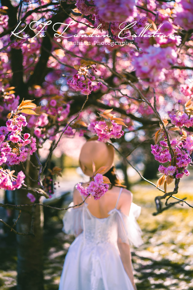 Cherry blossoms (21).jpg