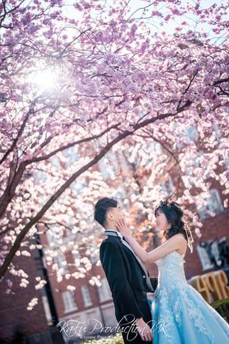 Cherry blossoms (22).jpg