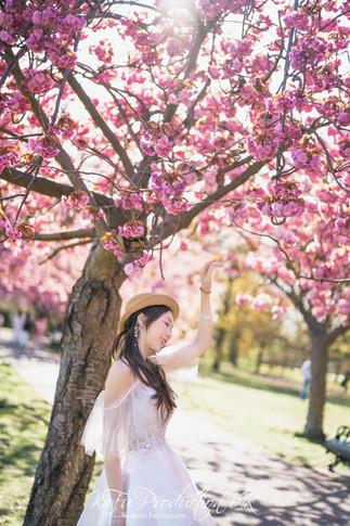 Cherry blossoms (17).jpg