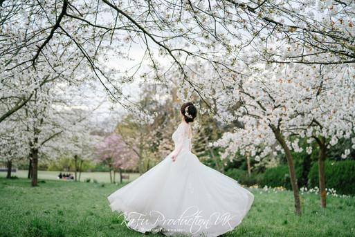 Cherry blossoms (15).jpg
