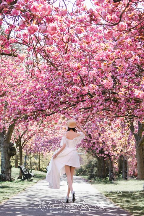 Cherry blossoms (37).jpg