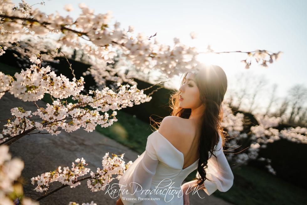 Cherry blossoms (35).jpg