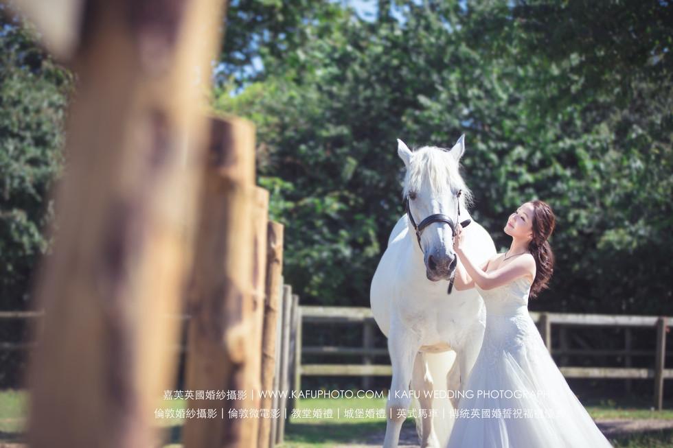 horse - 48.jpeg