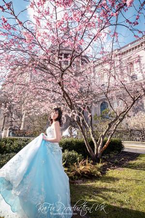 Cherry blossoms (34).jpg