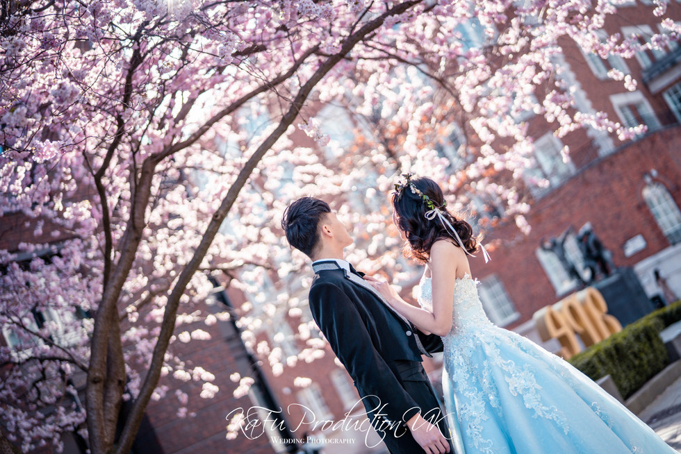 Cherry blossoms (23).jpg