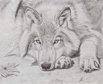 Degrace Original 14.375X11.75 Wolf