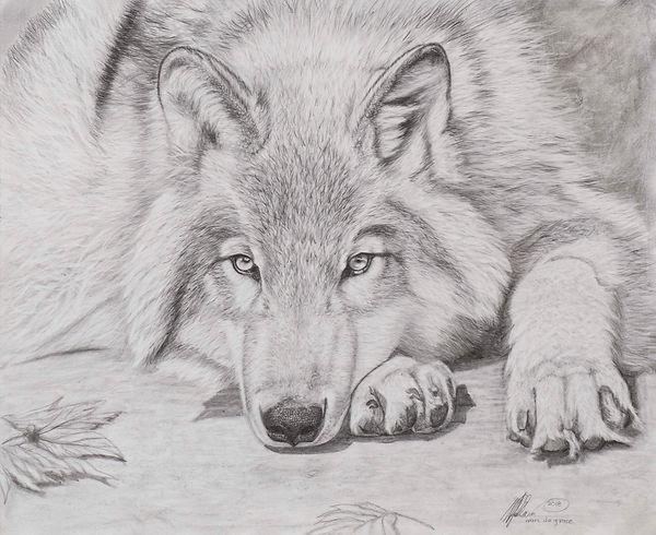 Kamen Degrace Original 14.375X11.75 Wolf