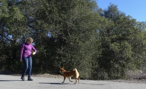 puppy school orange county, dog boot camp