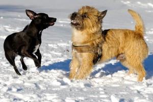 Dog obedience orange county