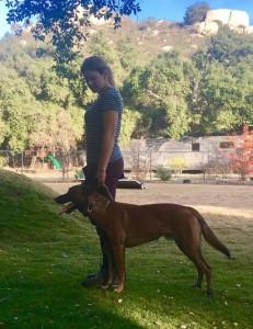 Orange county dog trainer