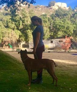 newport beach dog trainer