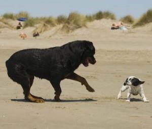oc dog trainer