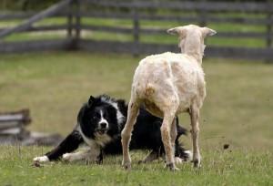 Dog taining Irvine