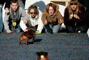 dog training orange county, orange county dog trainer