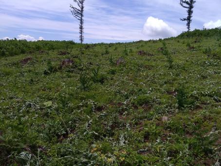 愛と根性の造林作業