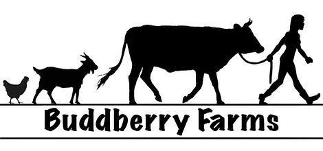 BBF Logo.jpg