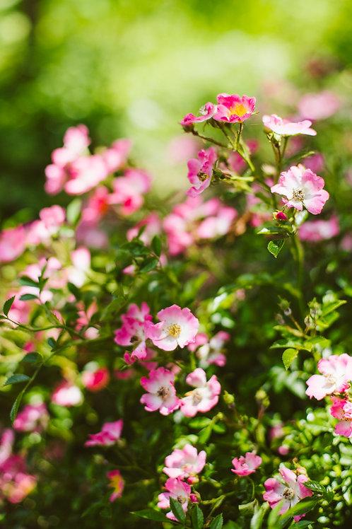 Print zomerbloemen 3 (A4 of A3)