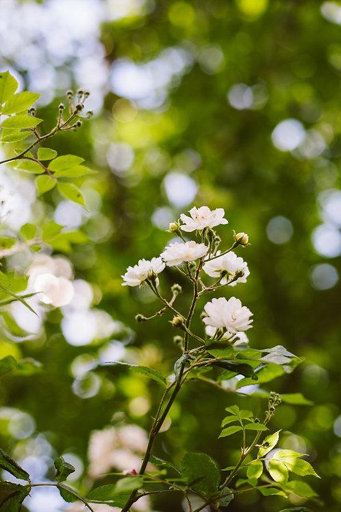 Print zomerbloemen 1 (A4 of A3)