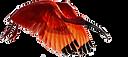 ibis 2.png