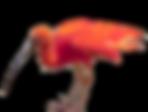 ibis deboute.png