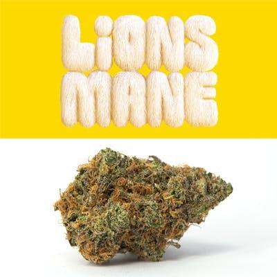 Lemonade Lions Mane 3.5G