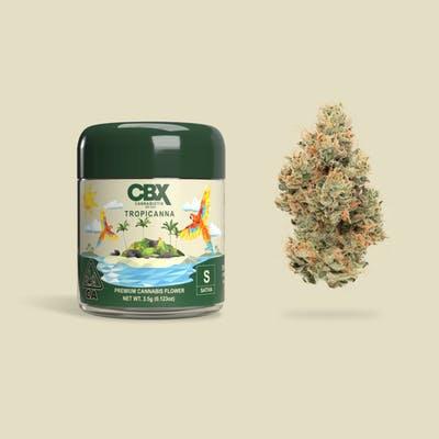 CBX Tropicana 3.5G