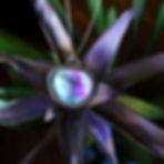 Dreamy green & purple striped Fluorite N