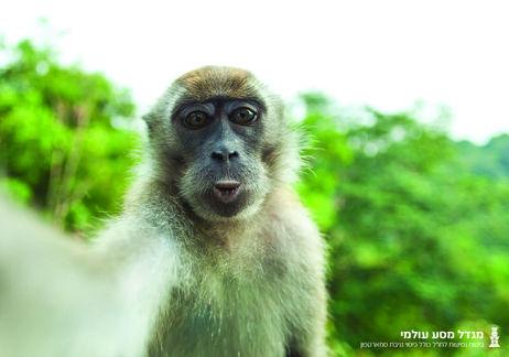 """""""Migdal"""" Monkey Selfie - Madad"""