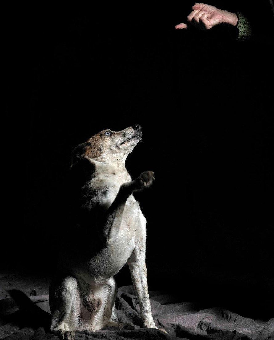 Tierfoto, Tierfotografie, Hund, Hundefoto, Tierportrait, Hundeportrait, Tierschutz, Tierschutzhund, Perrera, Tierphotographie, animal photography, dog, chien