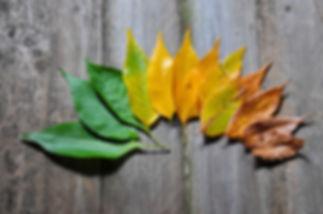 Lebensphasen und Veränderungen im Ruhestand