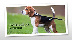 Dog Guidelines and Conditions 2020.jpg