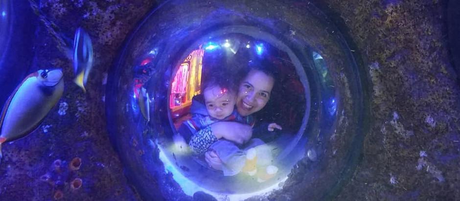 SEA-LIFE Aquarium 🦈