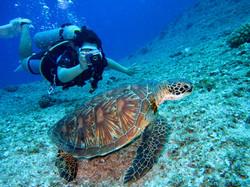 person-takes-photo-of-tortoise-1645028 (