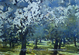 Blühende Obstbäume, 2011, Aquarell
