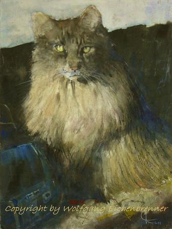 Alter Kater, Nieckes Katze, 2011 32 x 45cm, Aquarell