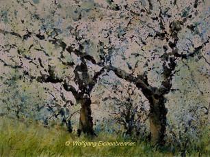 Obstbaumblüte, 2016, Aquarell