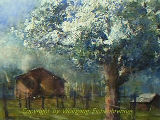 Obstbaumblüte I, 2002 46 x 34 cm Aquarell