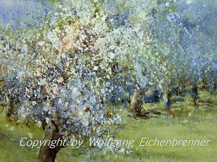 Obstbaumblüte V, 2013 46 x 34 cm Aquarell