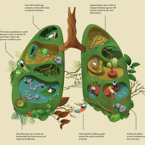 Example 1: Nature & Us Infographic by Jing Zhang