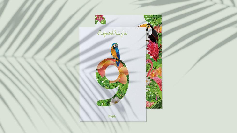 Kit 12 cartes étapes bébé collection Tropical jungle